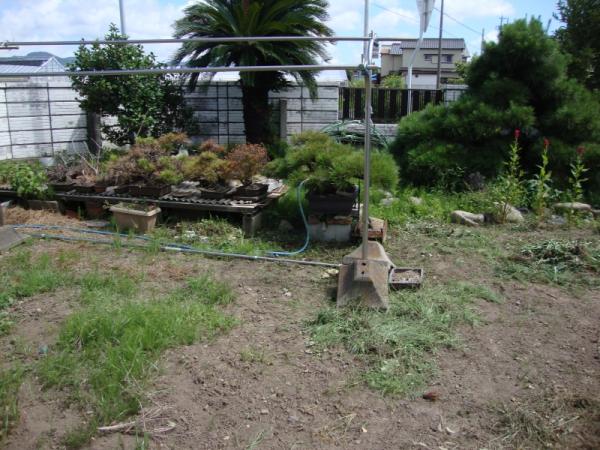雑然と荒れた庭